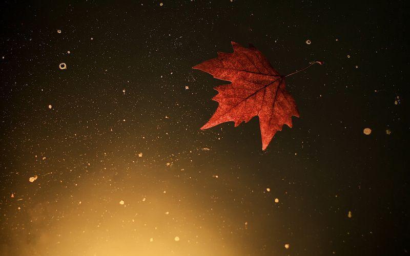 вода, осень, Лист (с изображениями) | Обои для рабочего ...