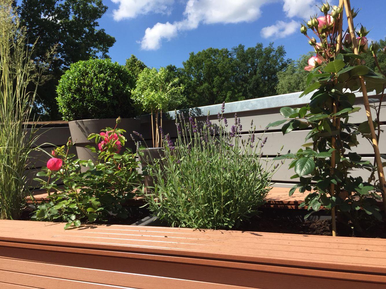 Dachgarten mit Sitzbank und Hochbeet Buchsbäume und Rosen - einfach schön