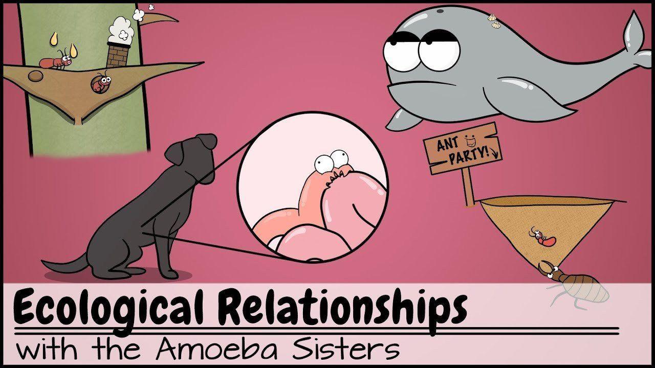 Ecological Relationships Worksheet Answers Ecological ...