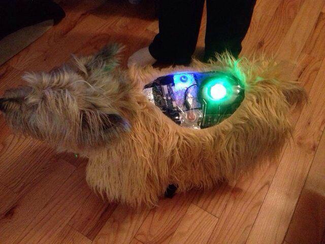 Robot Dog Costume Win Cool Halloween Costumes Crazy Halloween