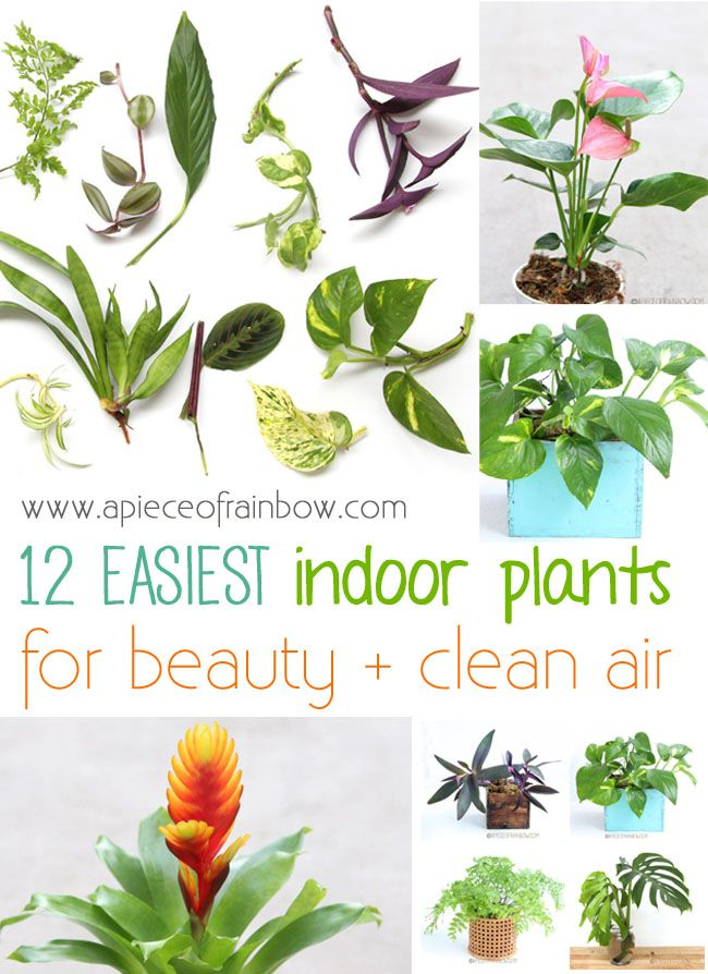 12 easy indoor plants for beauty clean air plants for Best easy indoor plants
