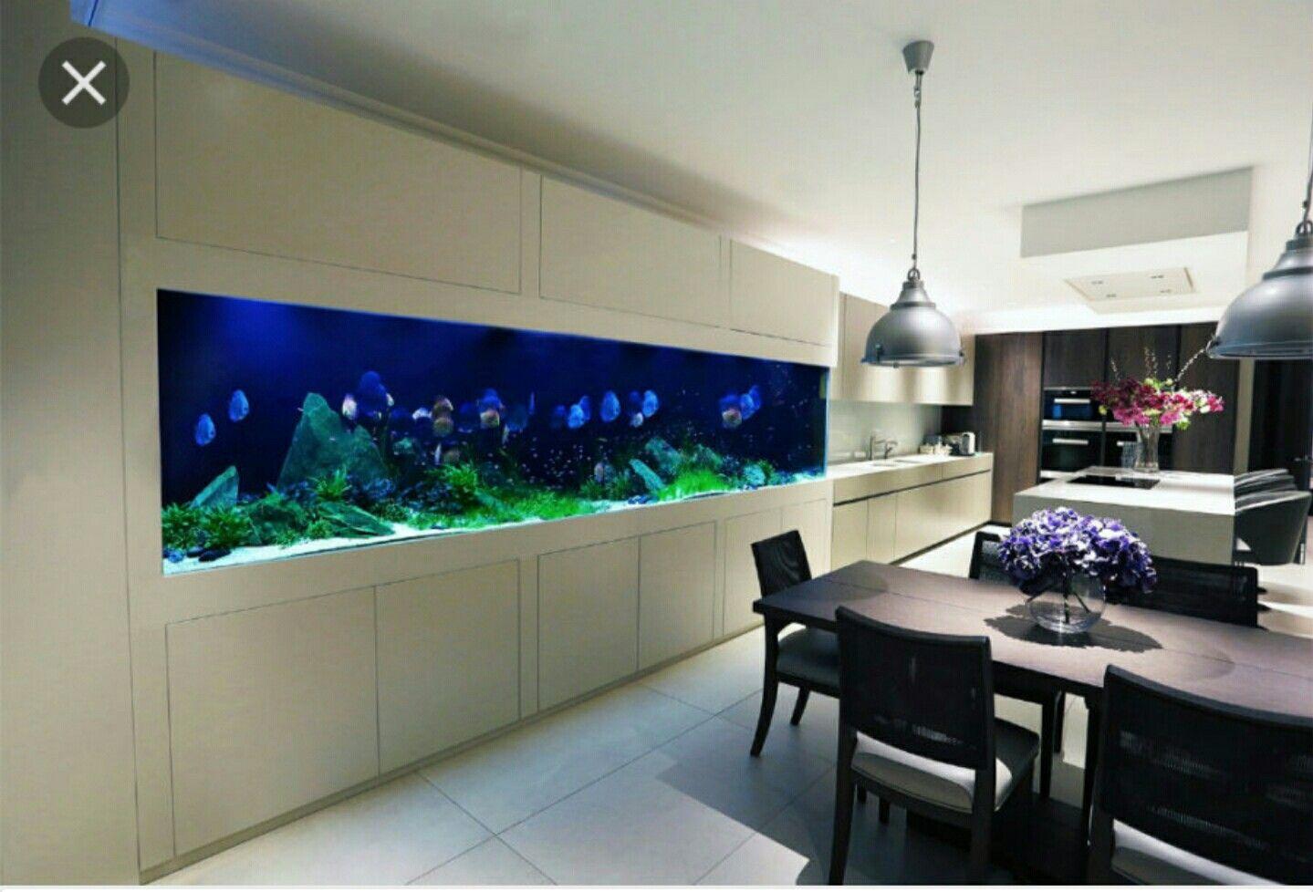 Pin by anna laitinen on aquarium pinterest aquariums