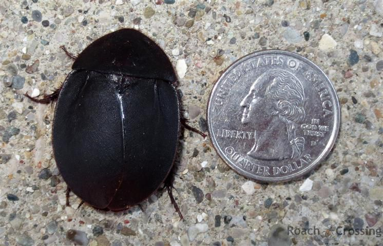 Pin On Roaches
