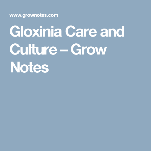 Gloxinia Care And Culture Grow Notes Gardening Gloxinia