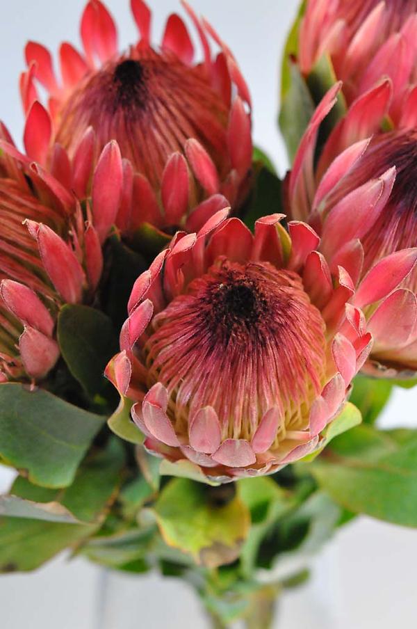 Flower Gallery Tesselaar Flowers