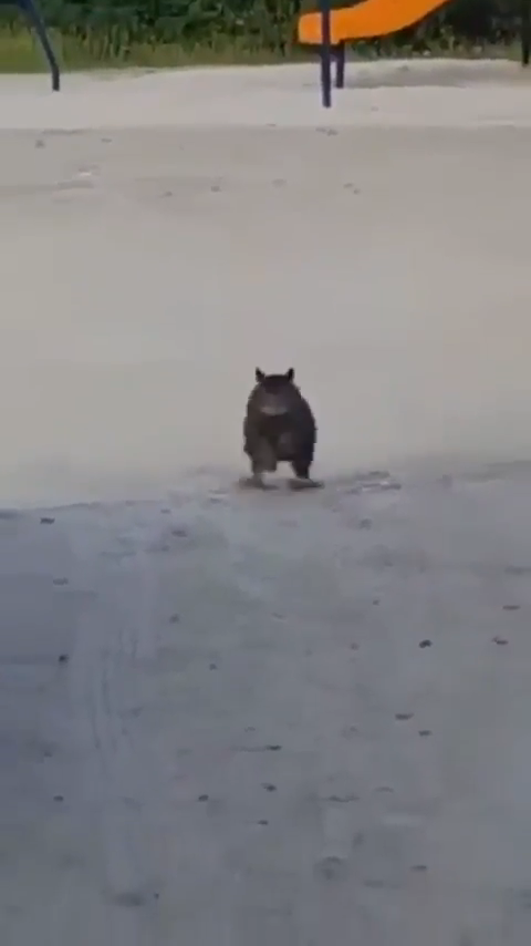 Photo of Absolute Unit