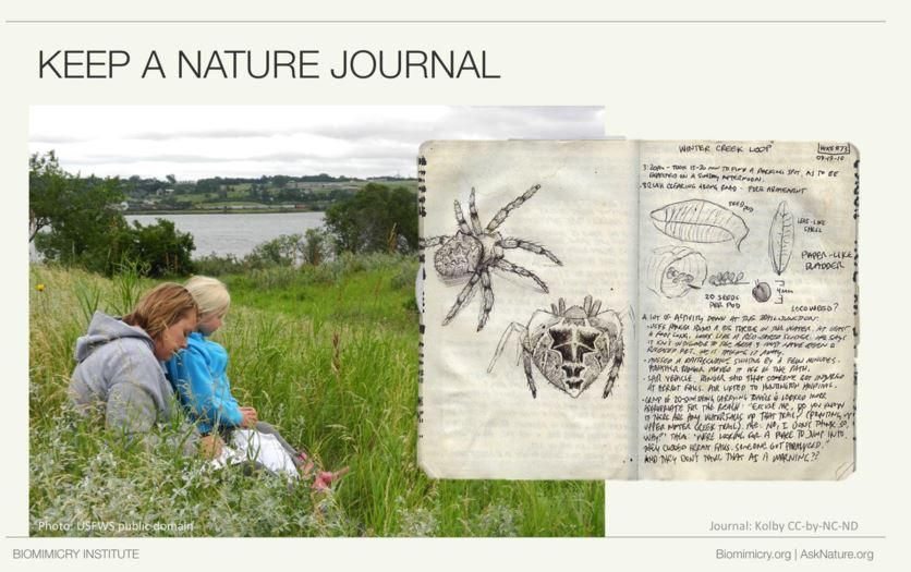 Drawing can help you see things in new ways - including #patterns and shapes. Keep a #nature journal. #BGDC2015