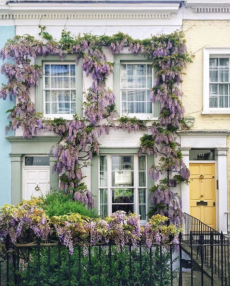 London Balcony Ideas: Notting Hill In London Is Wisteria Paradise!