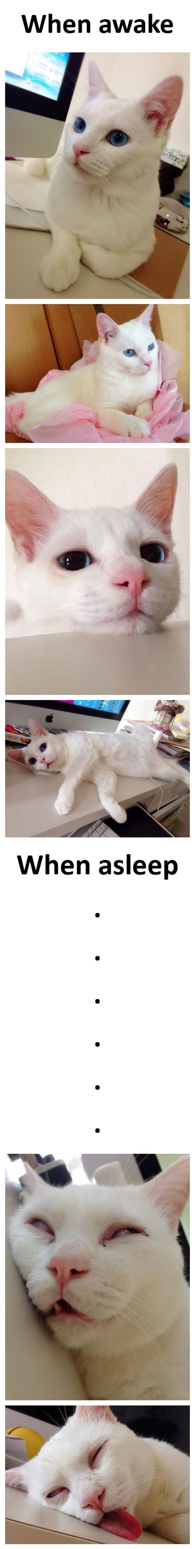 When a gorgeous cat sleeps... BAHAHAHA! So cute though!