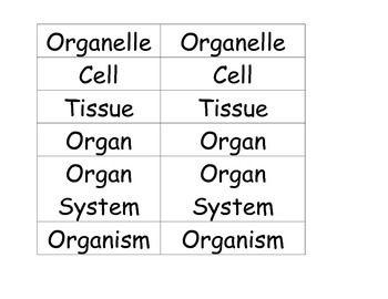 Levels Of Organization Math Math Organization Vocabulary Building Vocab