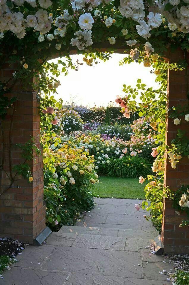 David Austin garden