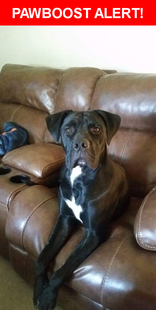Please spread the word! Bella was last seen in Richmond, VA 23218.  Description: She is spayed. At the moment people who have reported seeing  her say she is timid and runs away.   Nearest Address: McCloy and Idlewood