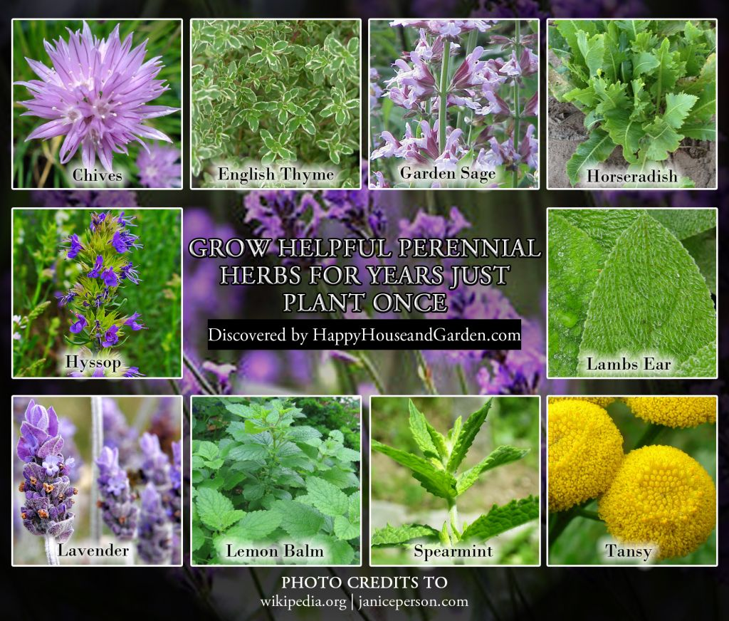 Grow Helpful Perennial Herbs For Years Just Plant Once Gardens