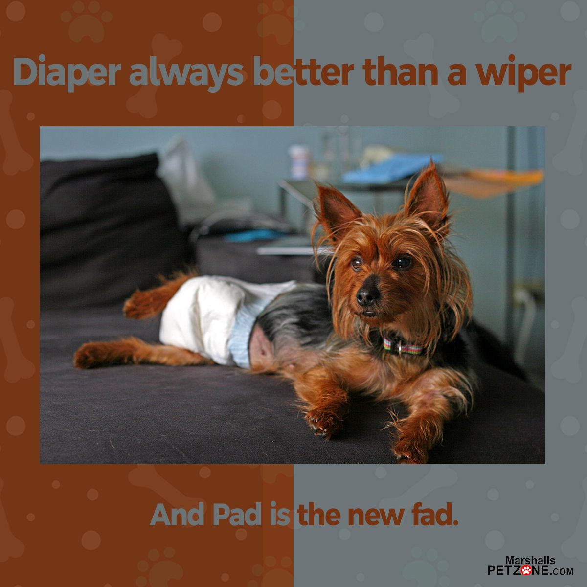 Diaper Always Better Than A Wiper And Pad Is A New Fad Click On Image To Shop Dog Cleaning Pets Dog Accessories
