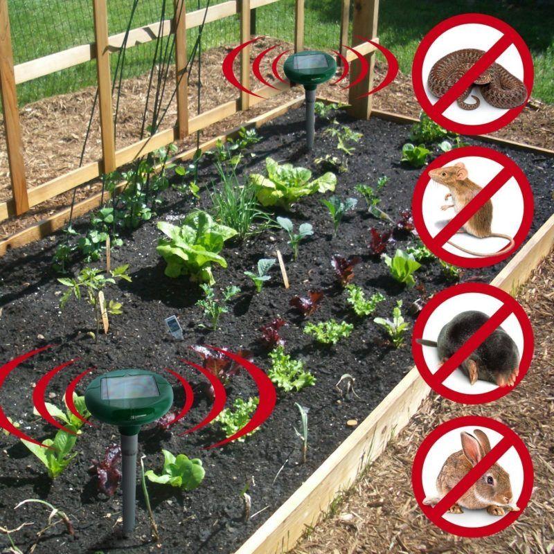 Garden Rodent Repellent Ideas Lawn Garden Plants Flat Gardening