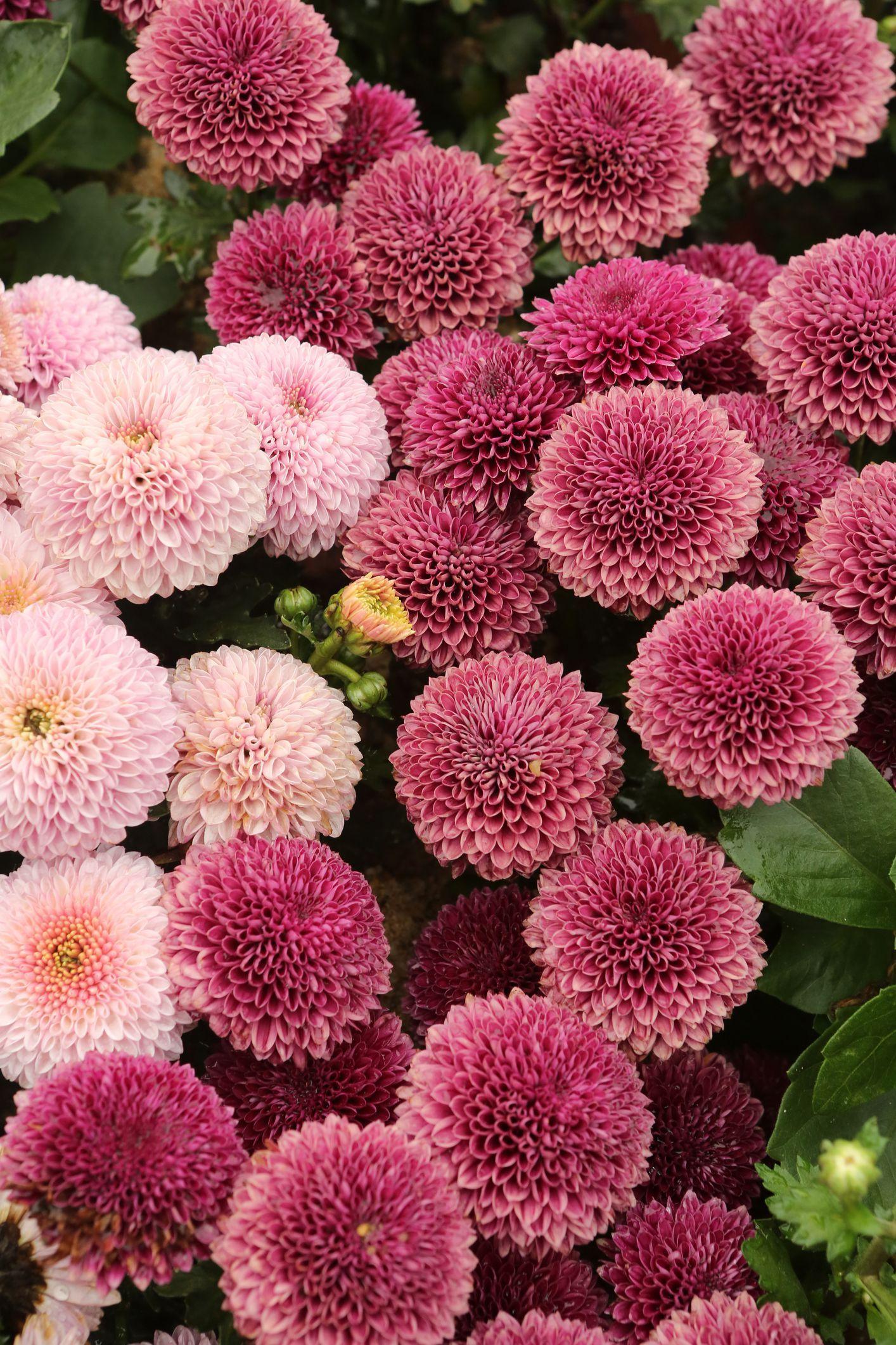 Pin On Cut Floral Arrangements