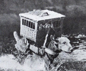 War Dogs: Airedale Terrier w/Carrier Pigeons