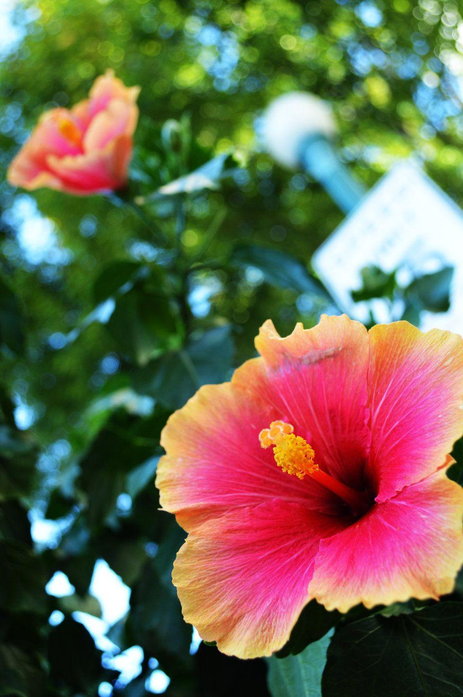 Resultado De Imagen De Tropical Flower Tumblr Floresturealeza