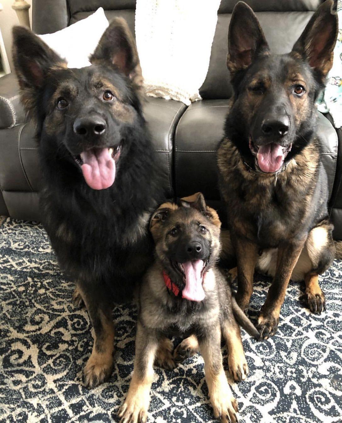 A DogS Purpose Deutsch