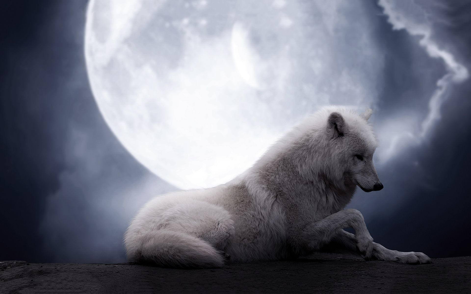 Search Results For The Wolf Moon Hd Desktop Wallpapers For