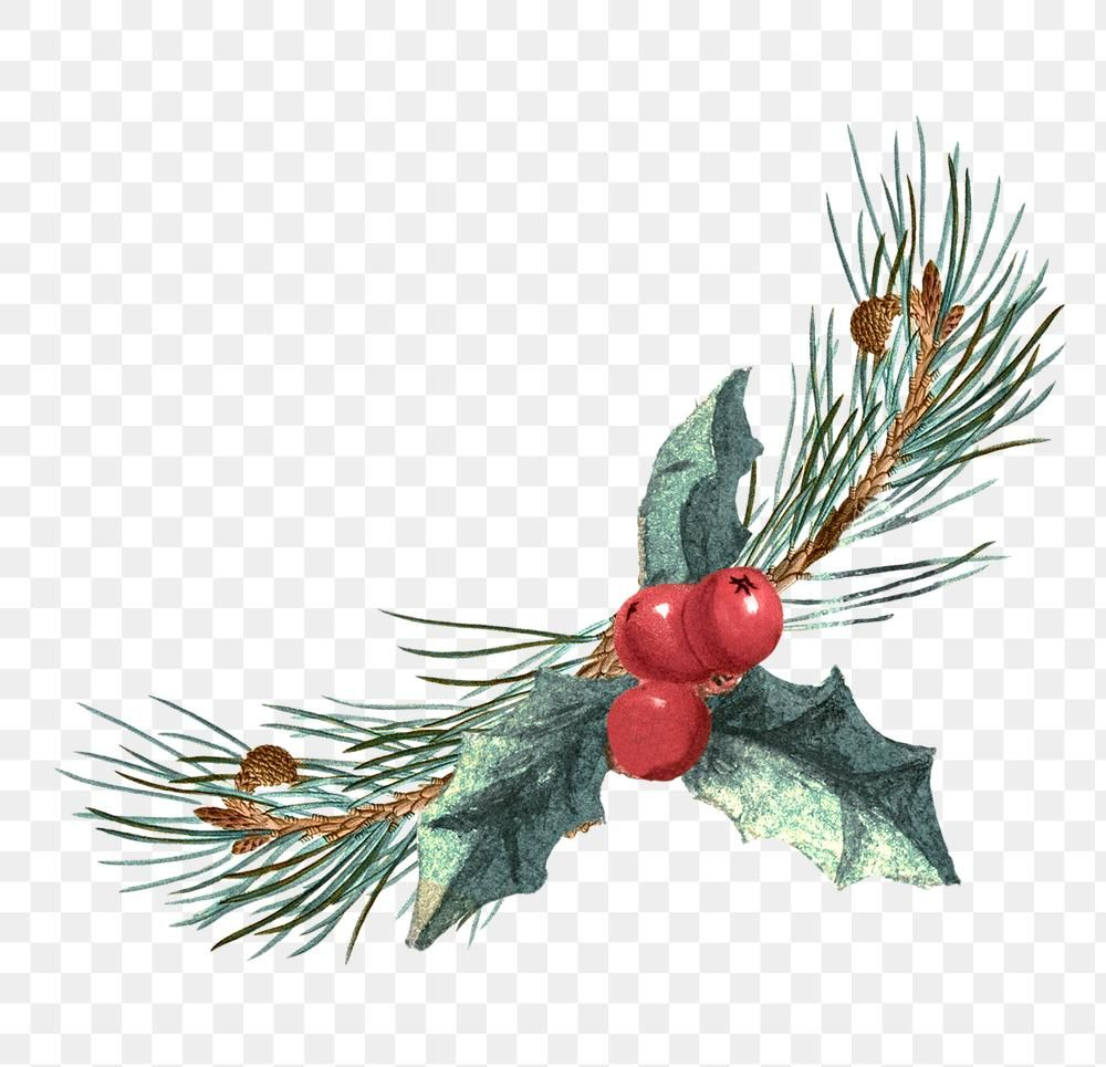 Download Premium Png Of Festive Holly Leaf Transparent Png 1228726 Christmas Background Vector Merry Christmas Vector Merry Christmas Background