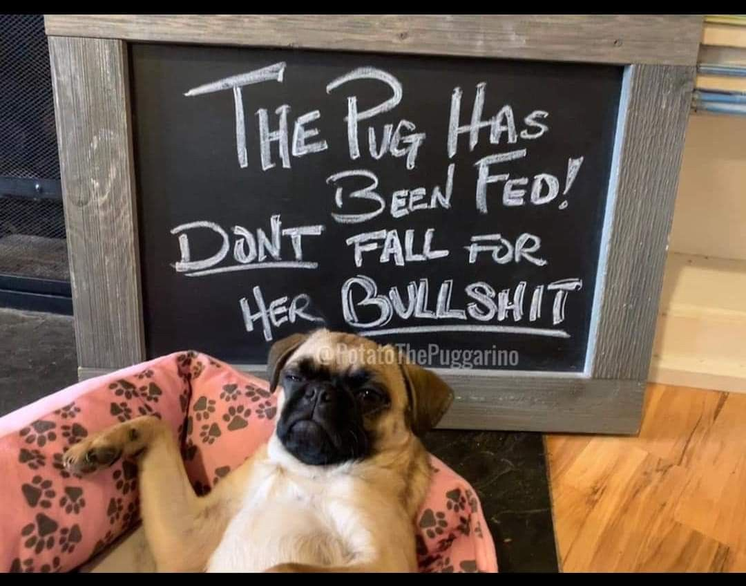 Pin By Robin Schwartx On Family Pug Love Art Quotes Pugs
