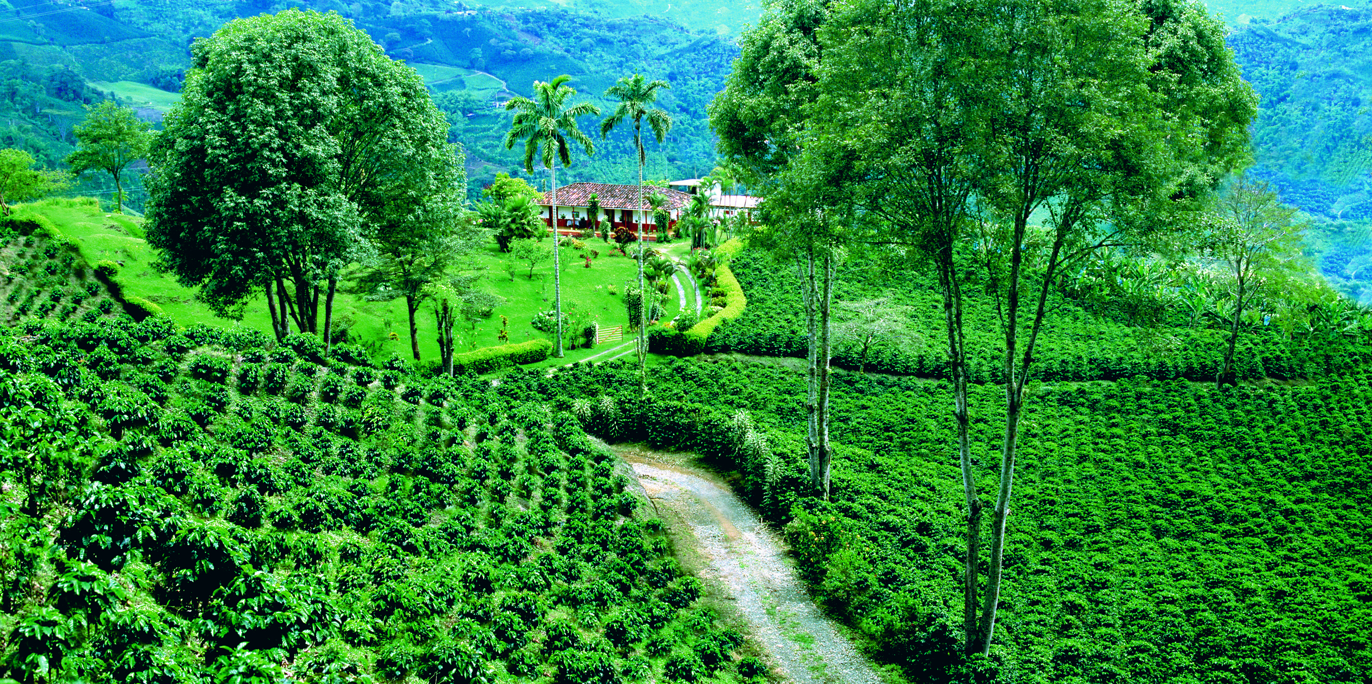 The Colombian Coffee Cultural Landscape The Traditional Coffee Process From The Seed To The Cup Viaje En America Del Sur Finca Cafetera Paisajes De Colombia