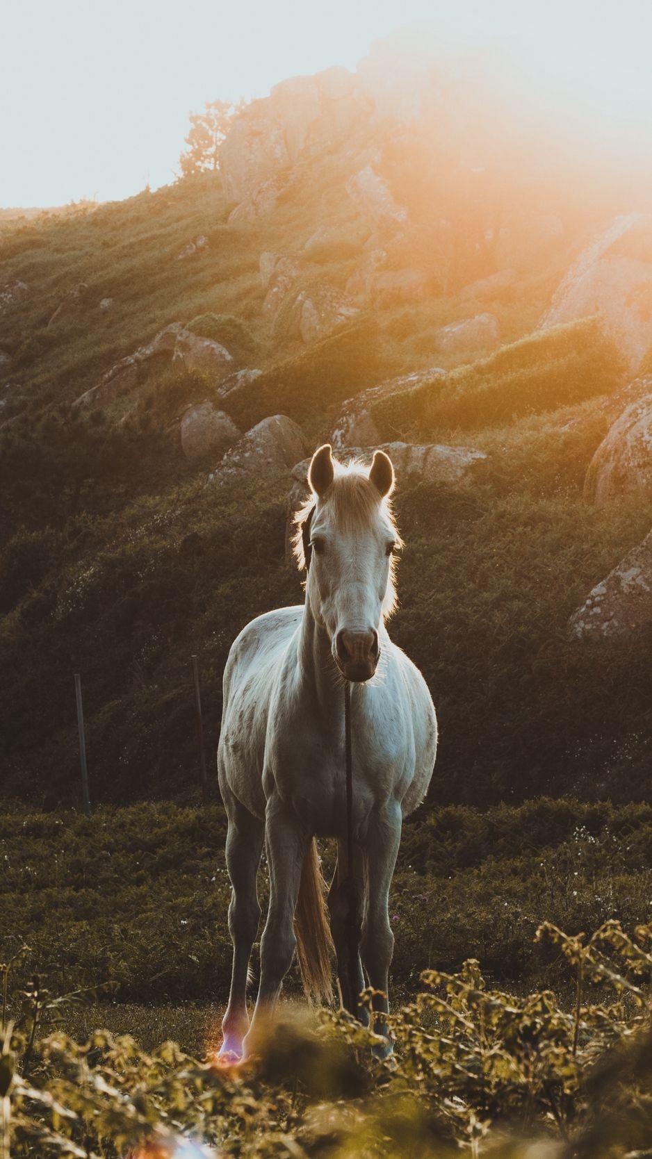 Horse Grass Sunlight Stones Wallpaper Horse Wallpaper Horses Beautiful Horses
