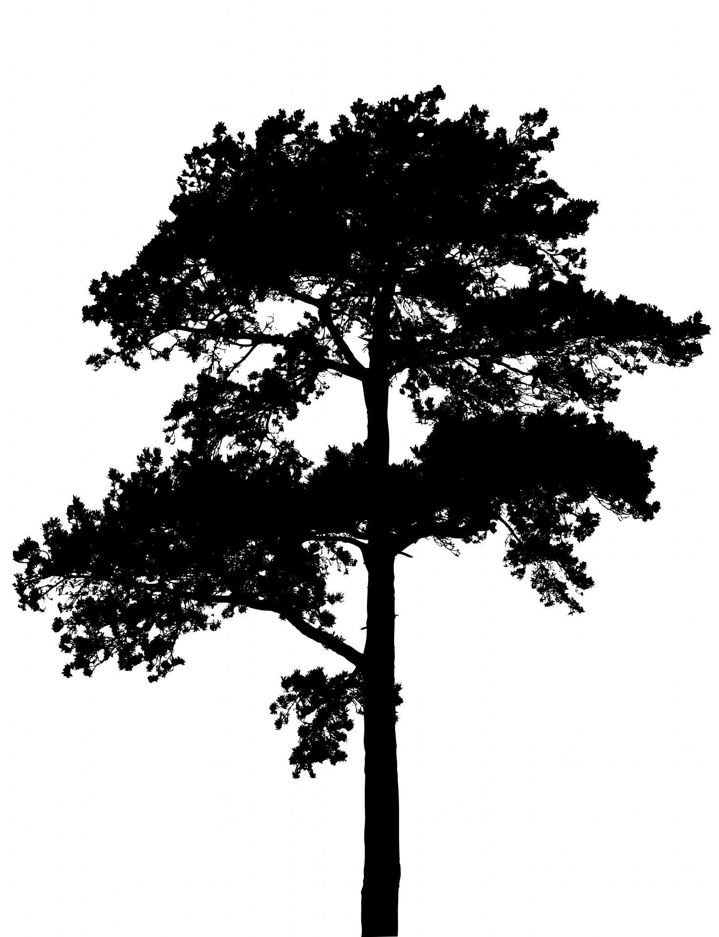 Image Result For Tree Silhouette Pine Tree Silhouette Tree
