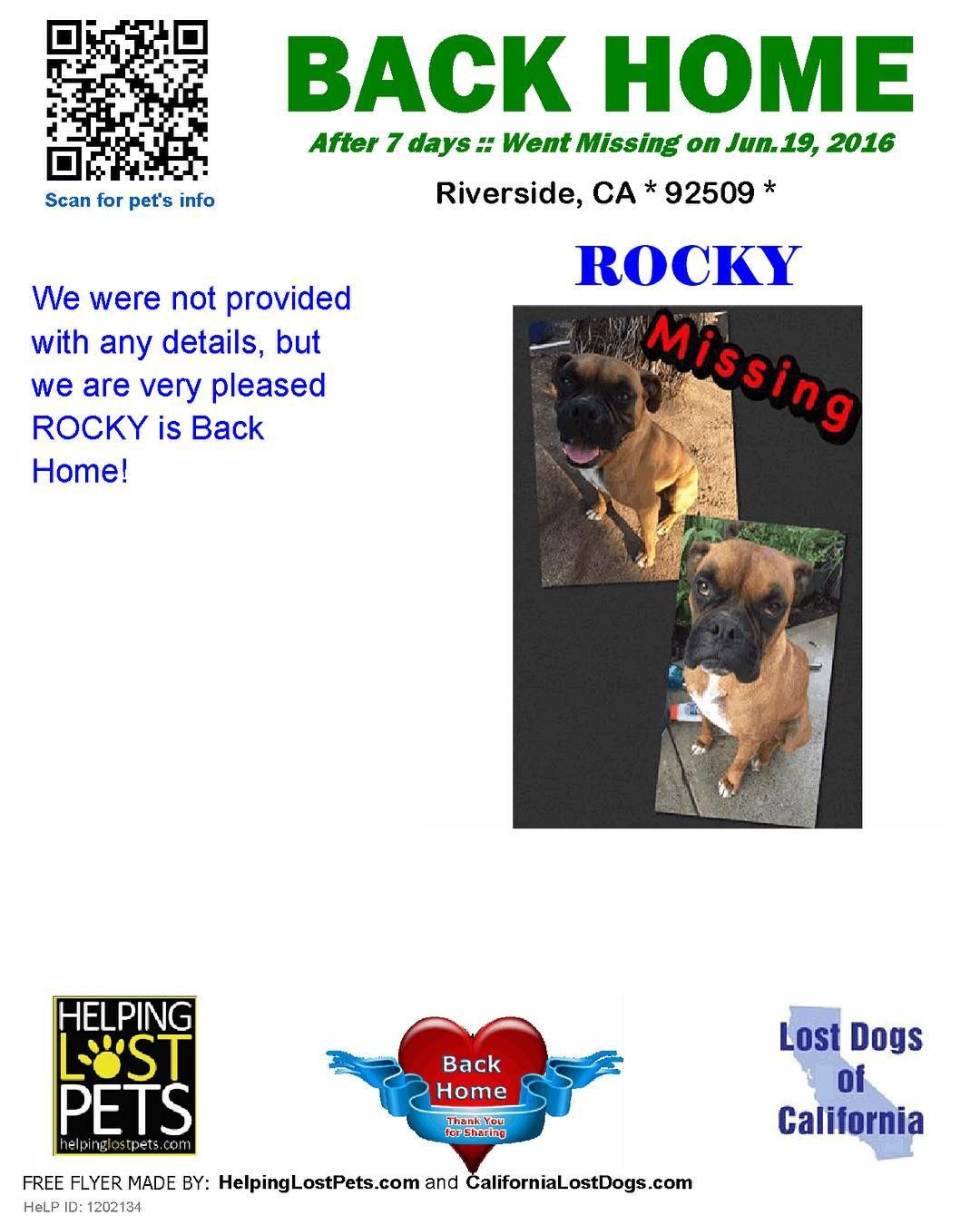 Backhome Rocky Boxer From Riverside Ca Has Been Reunited With His Family Lost Jun 19 2016 Back Home Jun 26 2016 Losing A Dog Losing A Pet California