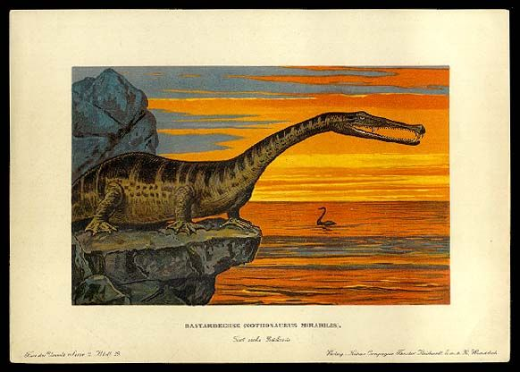 Nothosaurus - Early Prehistoric Animal and Dinosaur Pictures #dinosaurpics