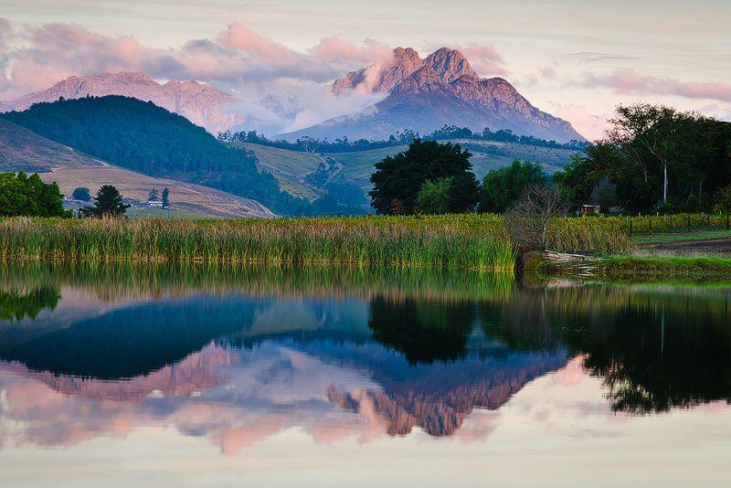 L'Avenir Vineyards, Stellenbosch, Western Cape | SOUTH AFRICA