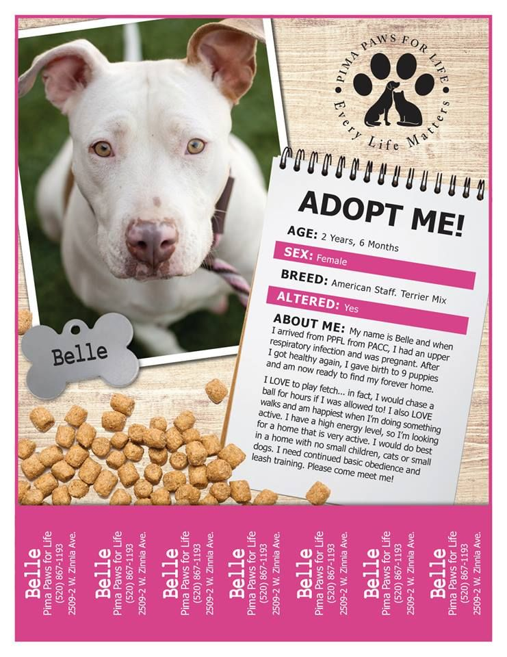 Adopt Me flyer featuring Belle! A 2 yr old Am. Staff mix