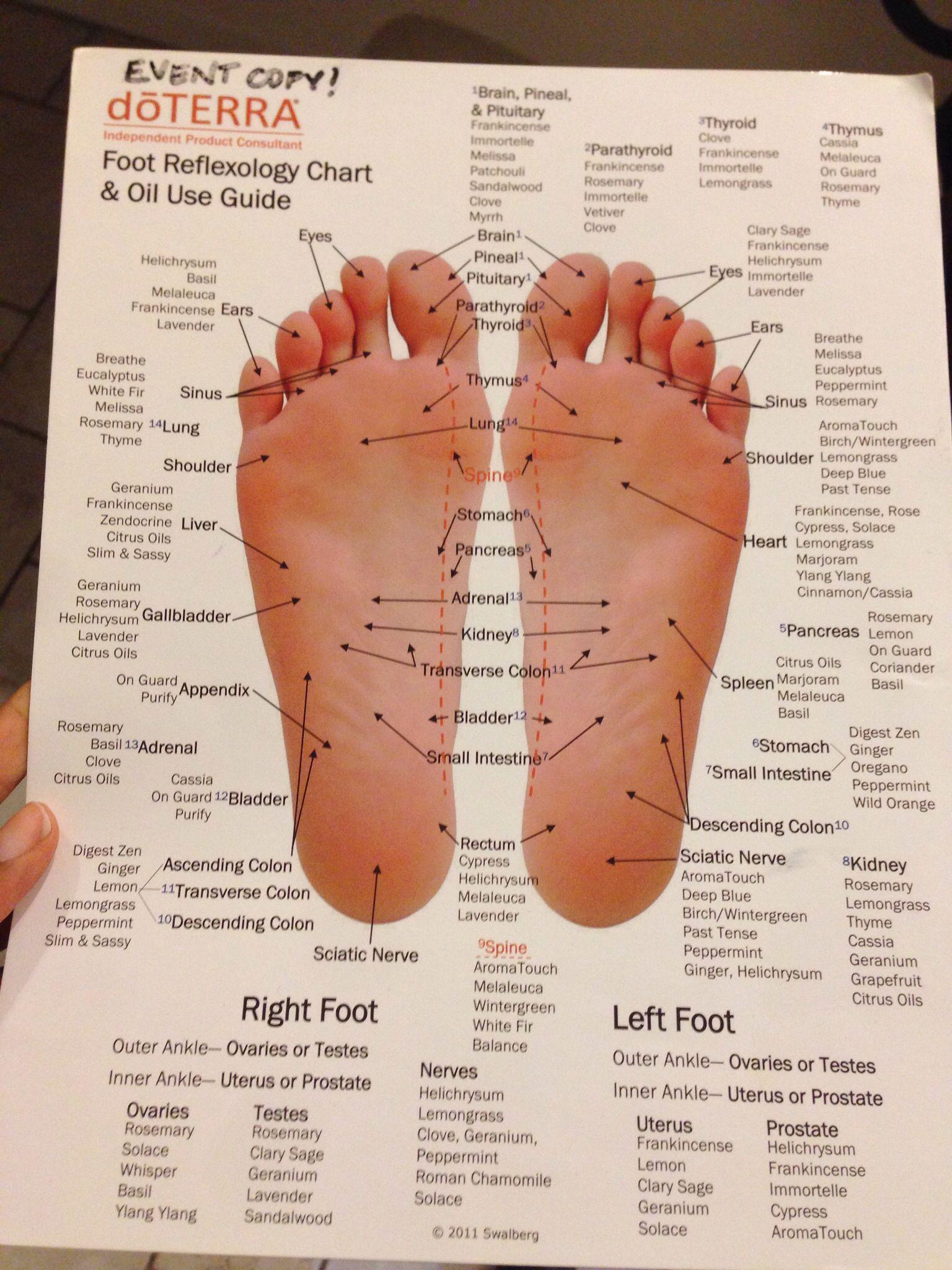 Reflexology with doterra essential oils natural medicine also chart ibovnathandedecker rh