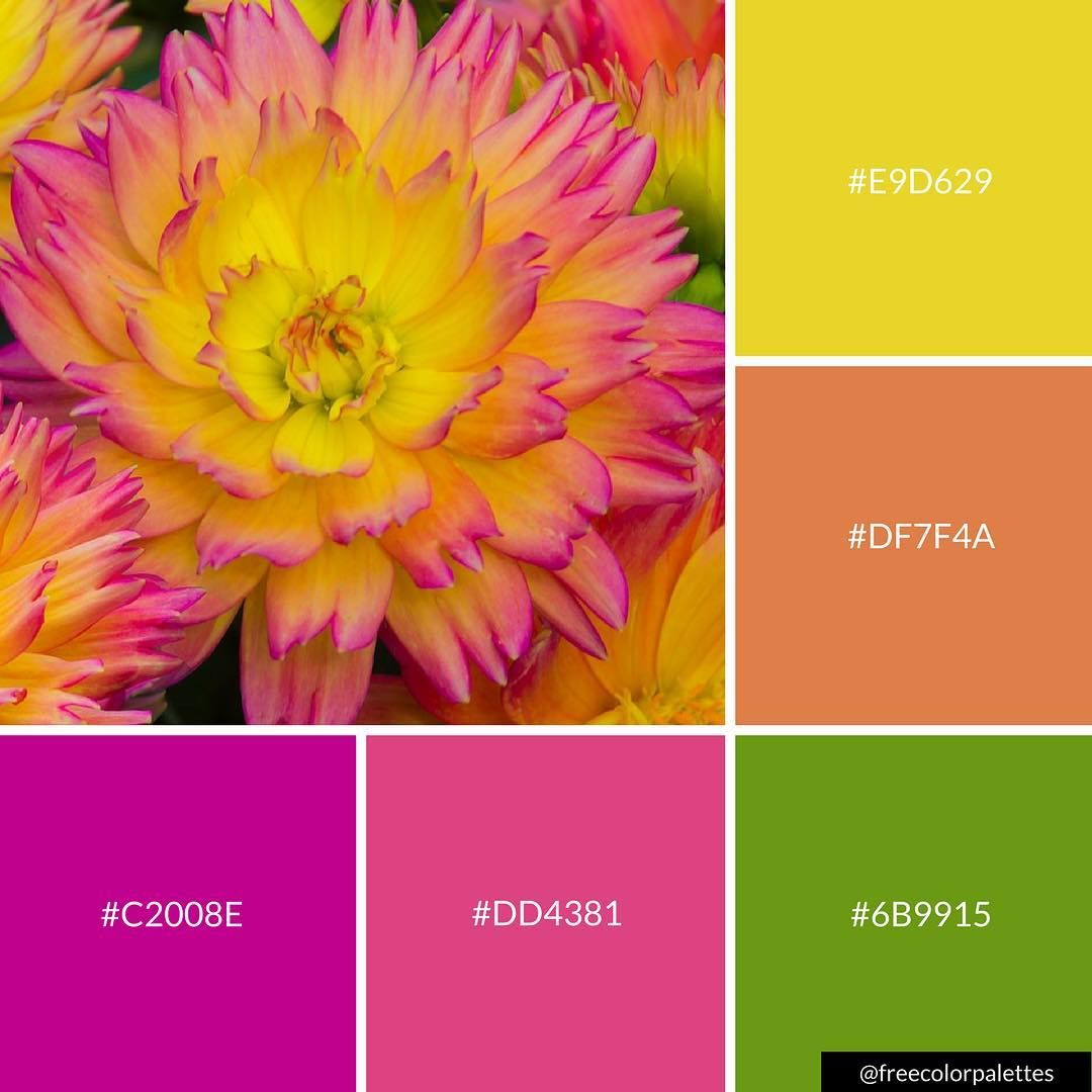Follow Freecolorpalettes For Daily Palettes Great For