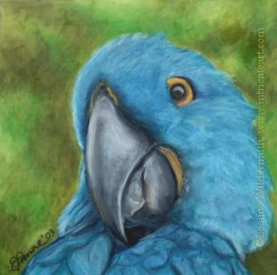 oil pastel artworks | ... Hyacinth Macaw blue bird portrait art ...