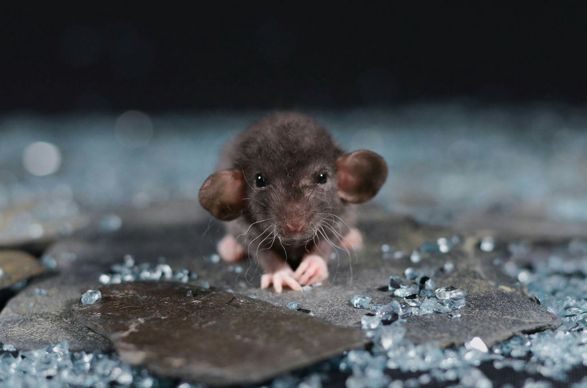 рассказал, что фото грустной мышки расскажу