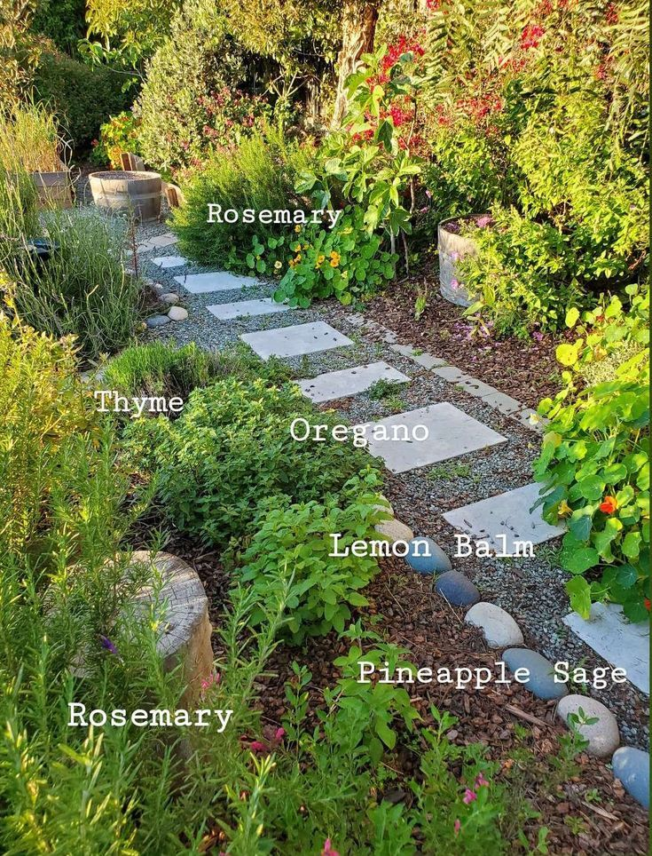 growing herbs 101 how to start a kitchen herb garden indoors or out homestead and chill in on outdoor kitchen herb garden id=56467