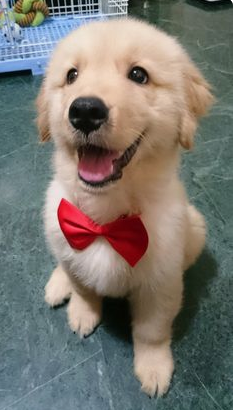 Photo of Cute Puppy With A Bowtie