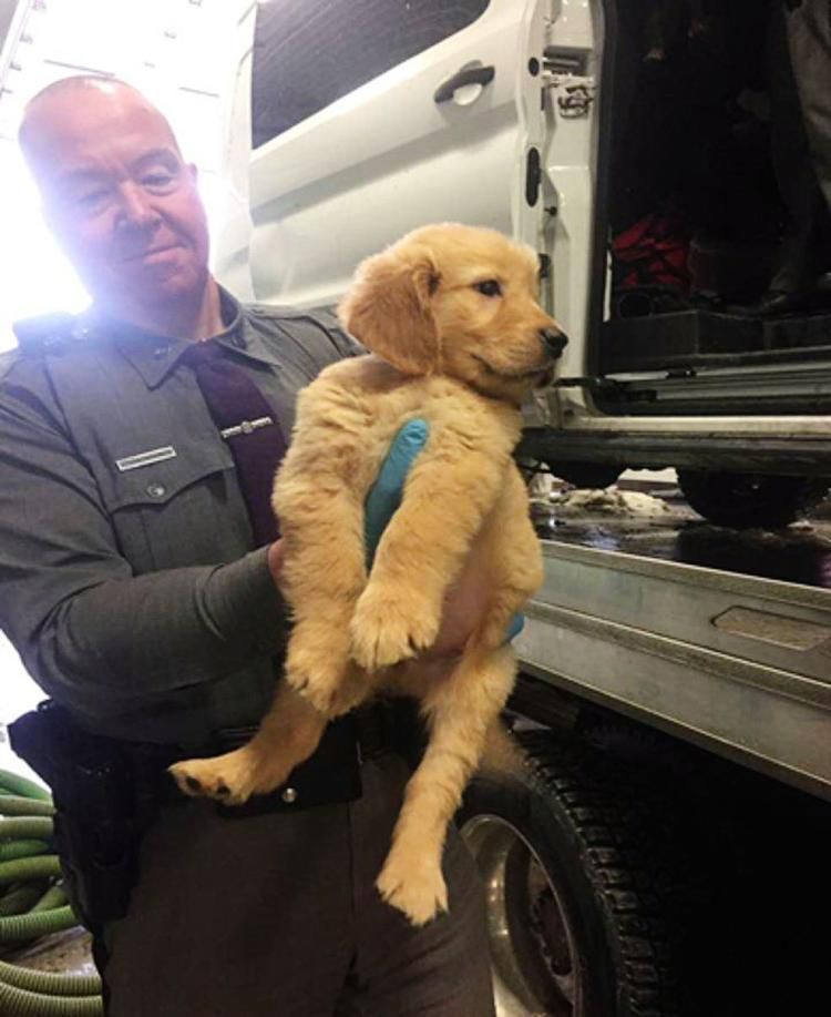 Puppy Mill Van With 103 Puppies Overturns In Nyc 01 23 2017