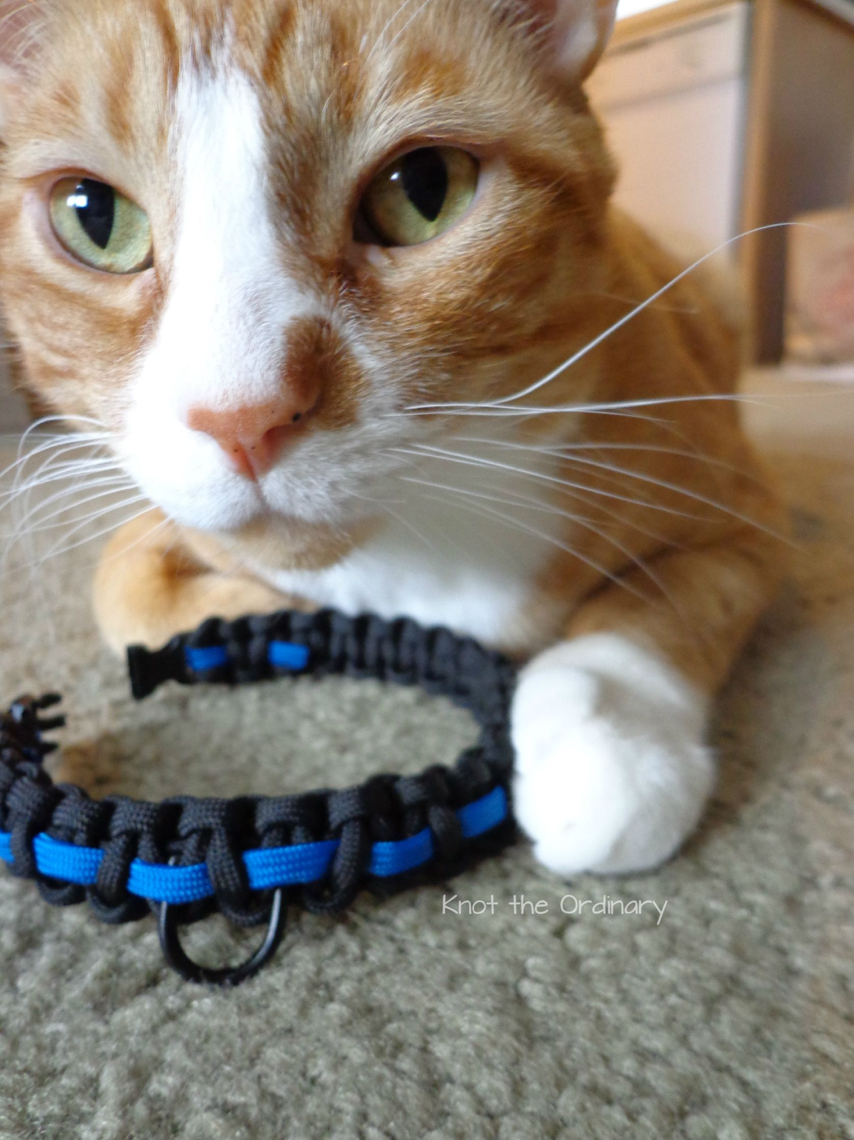 Crazybrainchocolate Paracord Dog Collars Paracord Projects Parachute Cord Crafts