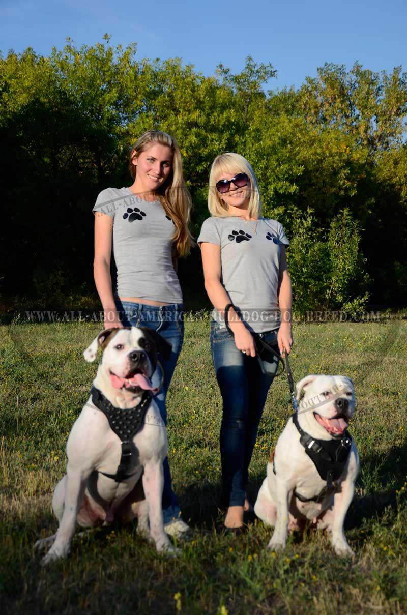 Http Www American Bulldog Dog Breed Store Com Laurie Hamilton