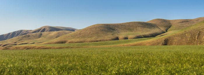 Wind Wolves:  Plateaus, Ravines, and Canyons by Wayne Wong on Capture Kern County // The plateaus and deep furrows characteristic of the Wind Wolves landscape are sometimes hidden by line of sight.  This scene shows a plateau and the hidden canyons in the furrows.