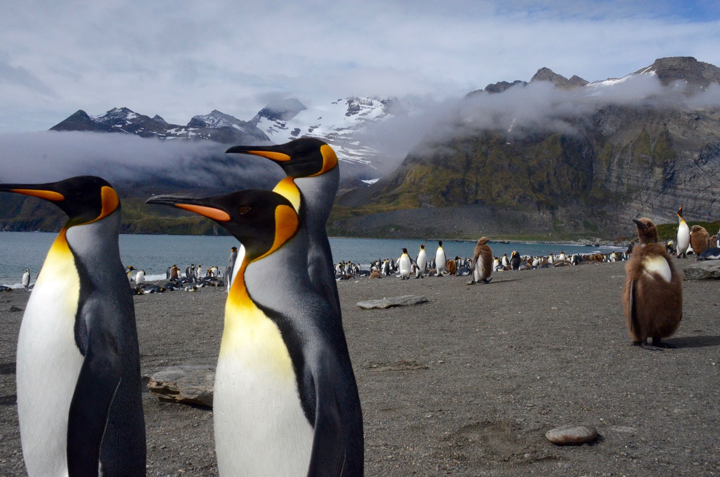 Students Will Research Recent Statistics On Endangered