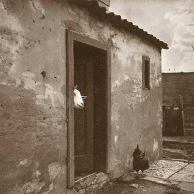 unknown ph. 1929