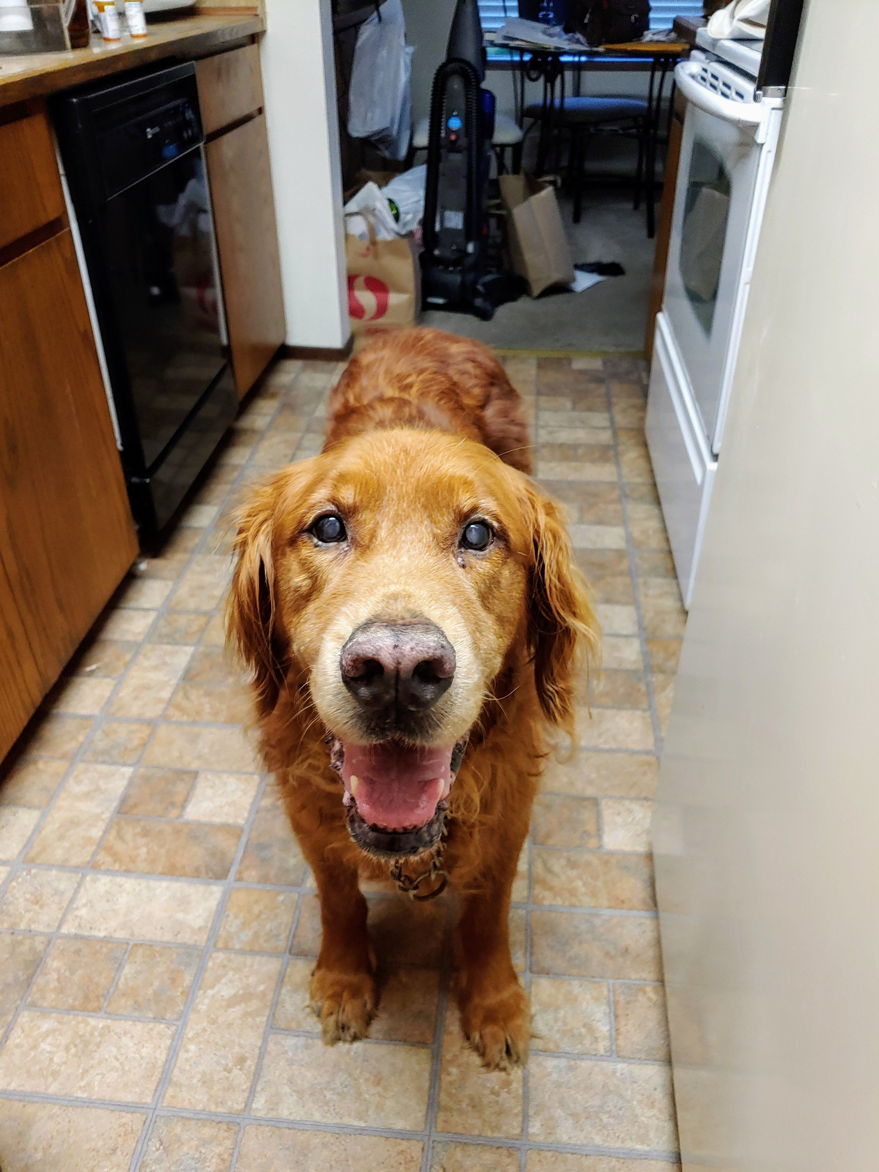 This Good Boy Stood By My Side For 14 Years The Only Downside Of Goldens Is How Much You Miss Them Golden Puppies Crazy Dog Lady Cute Dogs