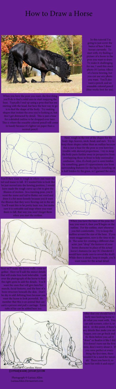 Tutorial How To Draw A Horse By Egyptiandragon1 Horse Drawings Animal Drawings Pencil Drawings Of Animals