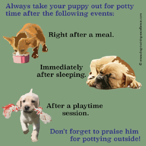 What Is The Best Way To Potty Train A Puppy Potty Training Puppy
