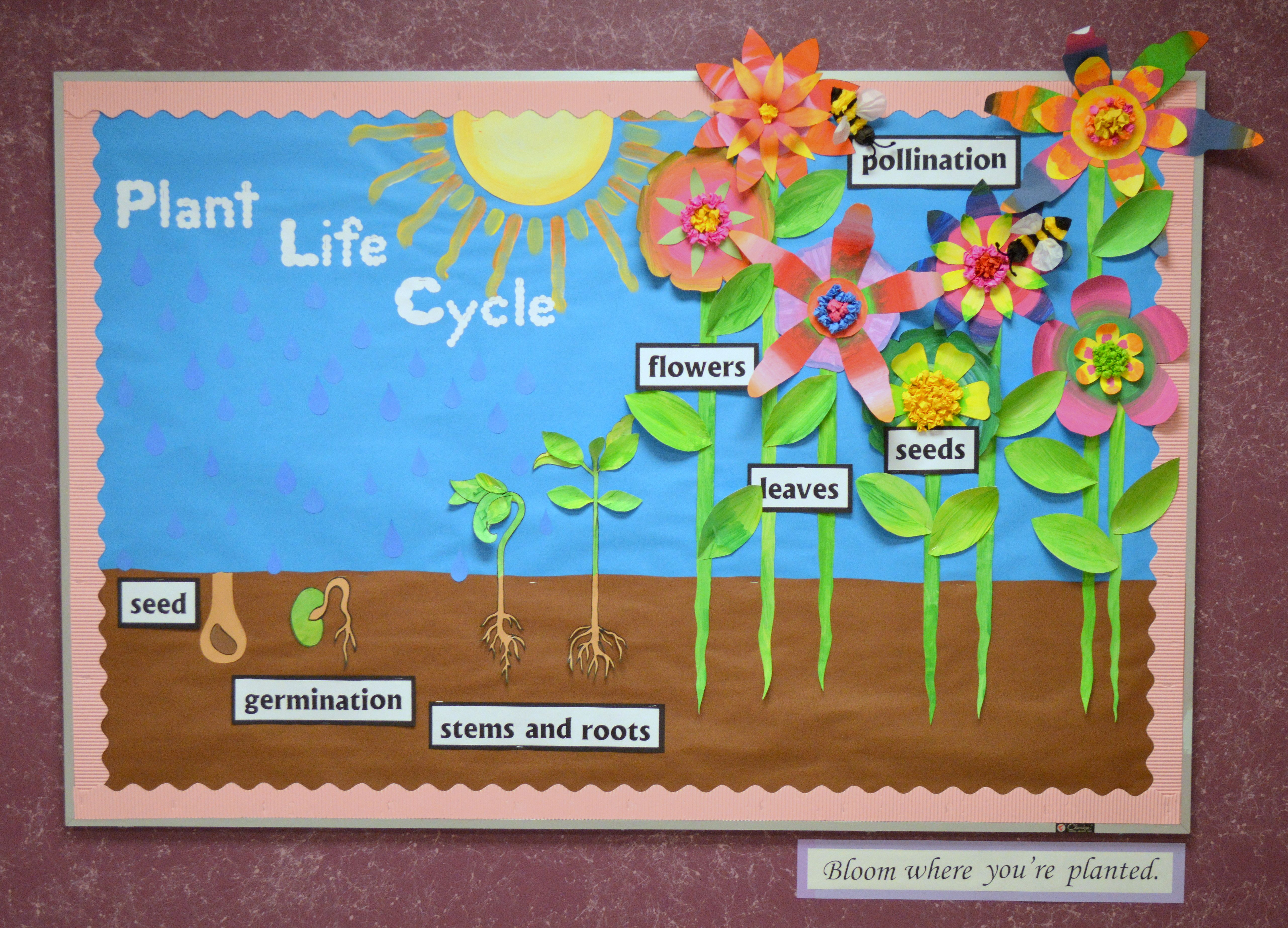 Spring Bulletin Board Depicting The Plant Life Cycle