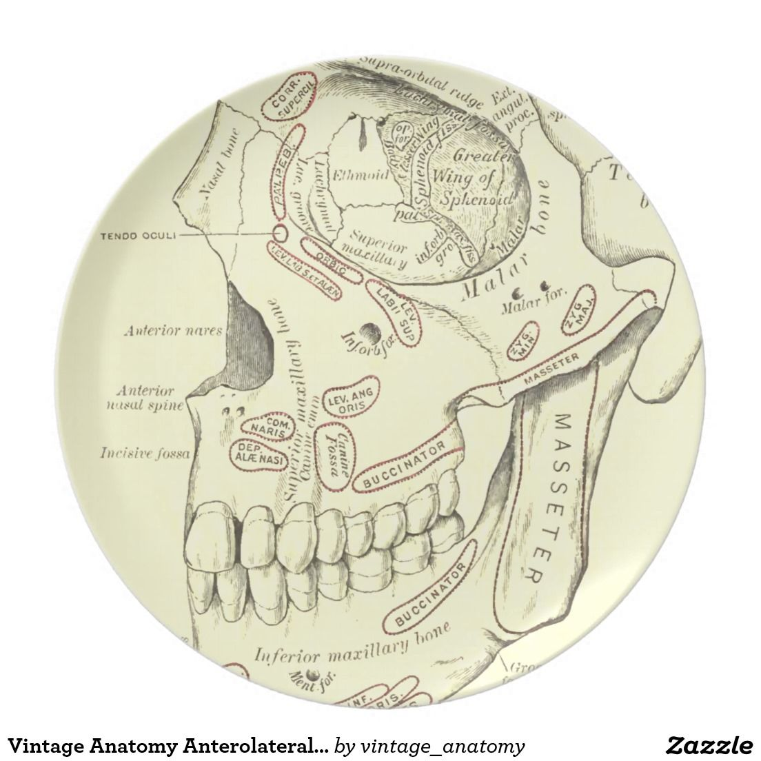 Vintage Anatomy Anterolateral region of the skull Dinner Plate ...